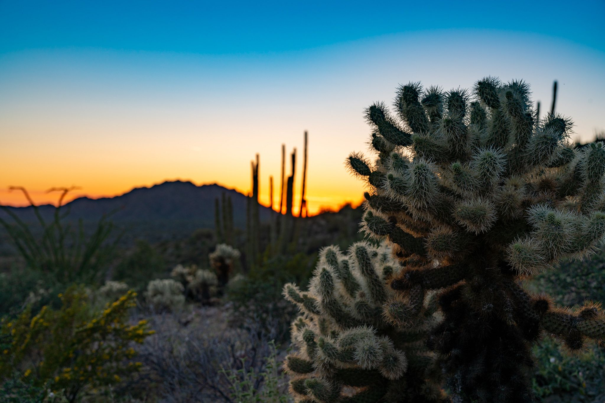 Sunset on the Desert View Trail
