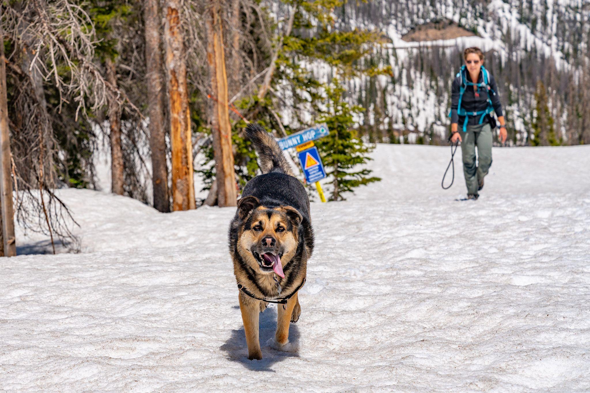 Jasper in the snow