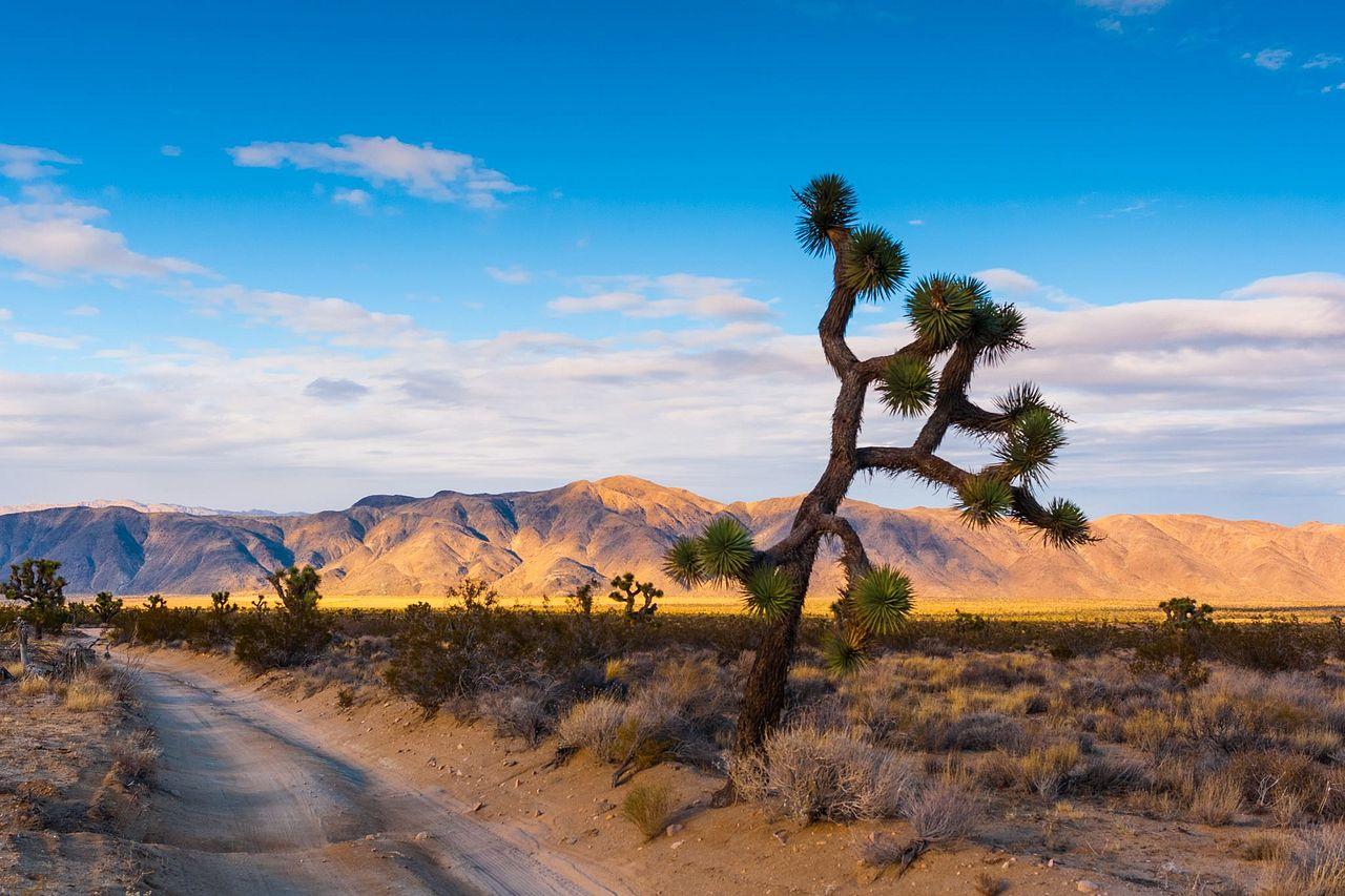 What is a National Park Unit?