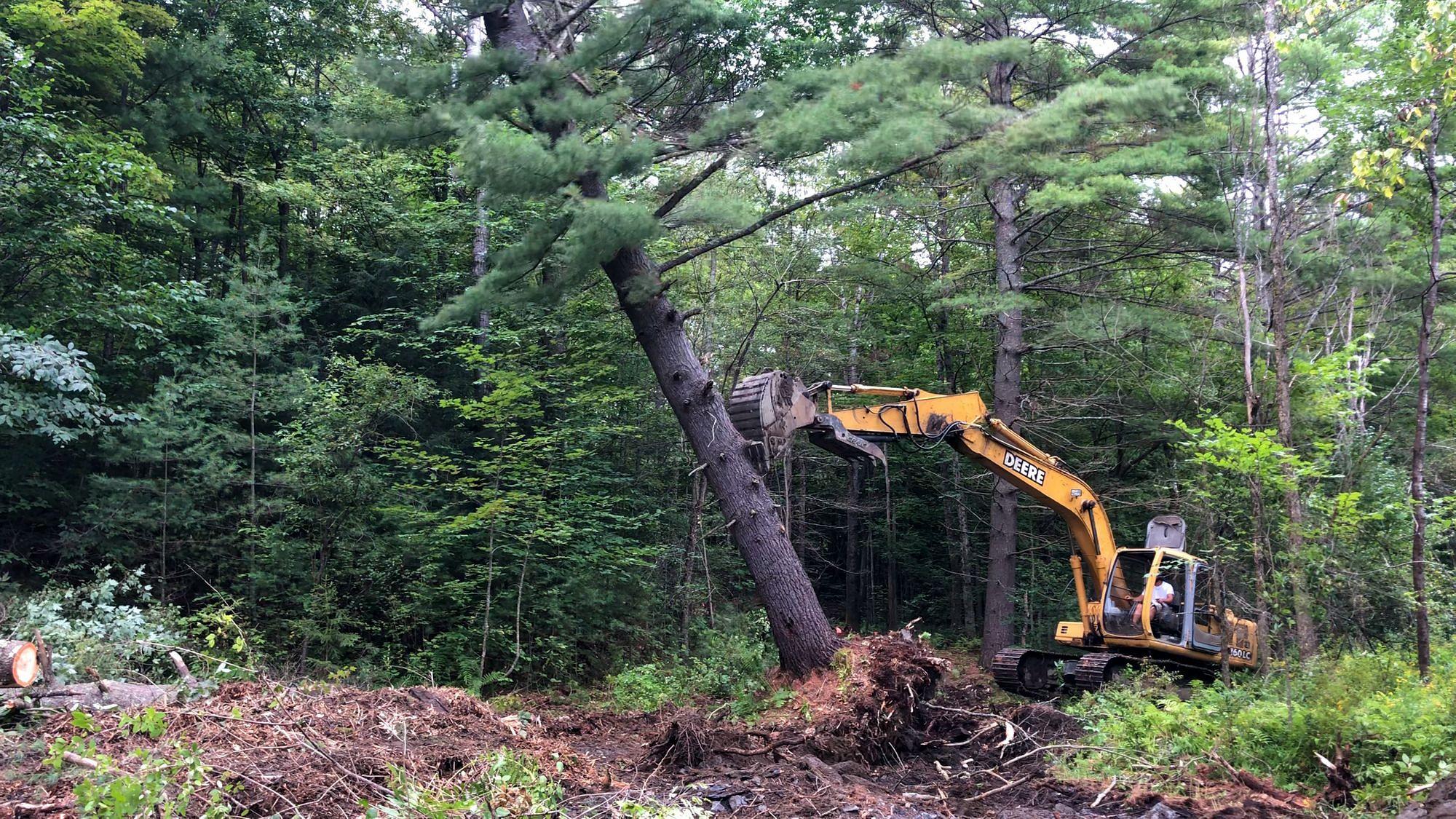 Excavator Pushing Over Tree