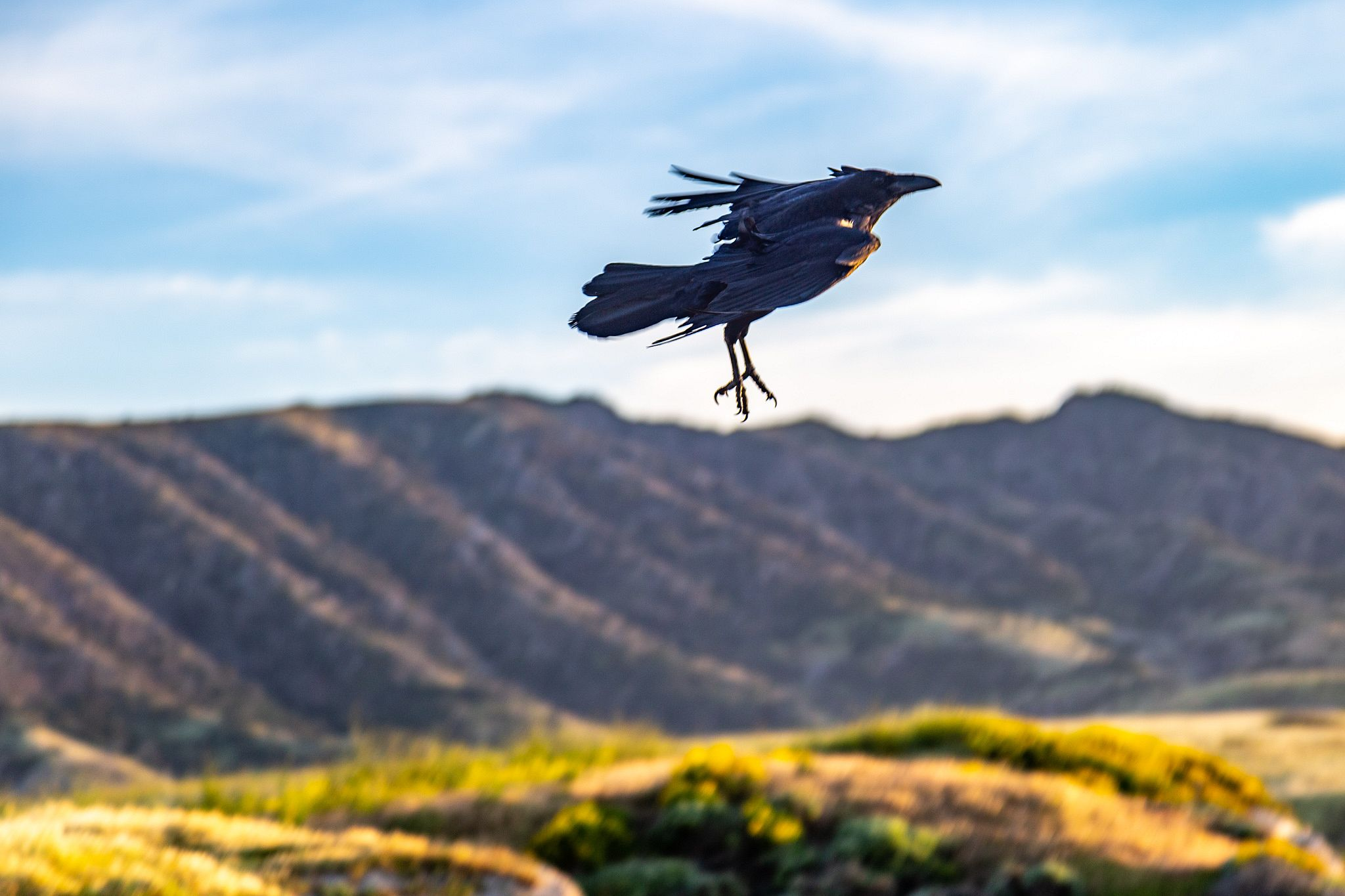 Birds flying in the wind
