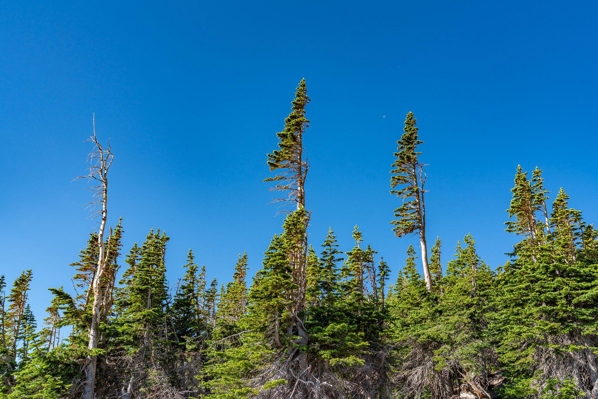 Banner Trees