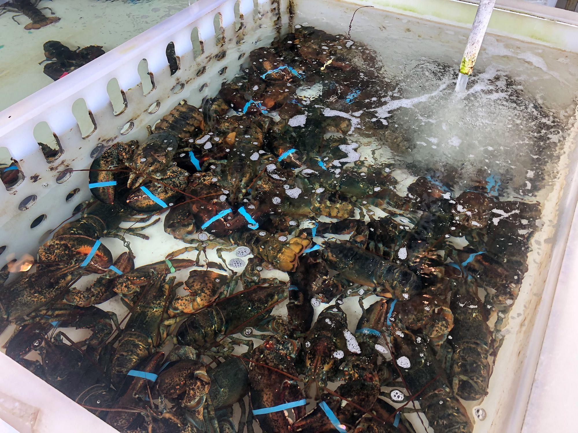 Bayleys Lobster Pound