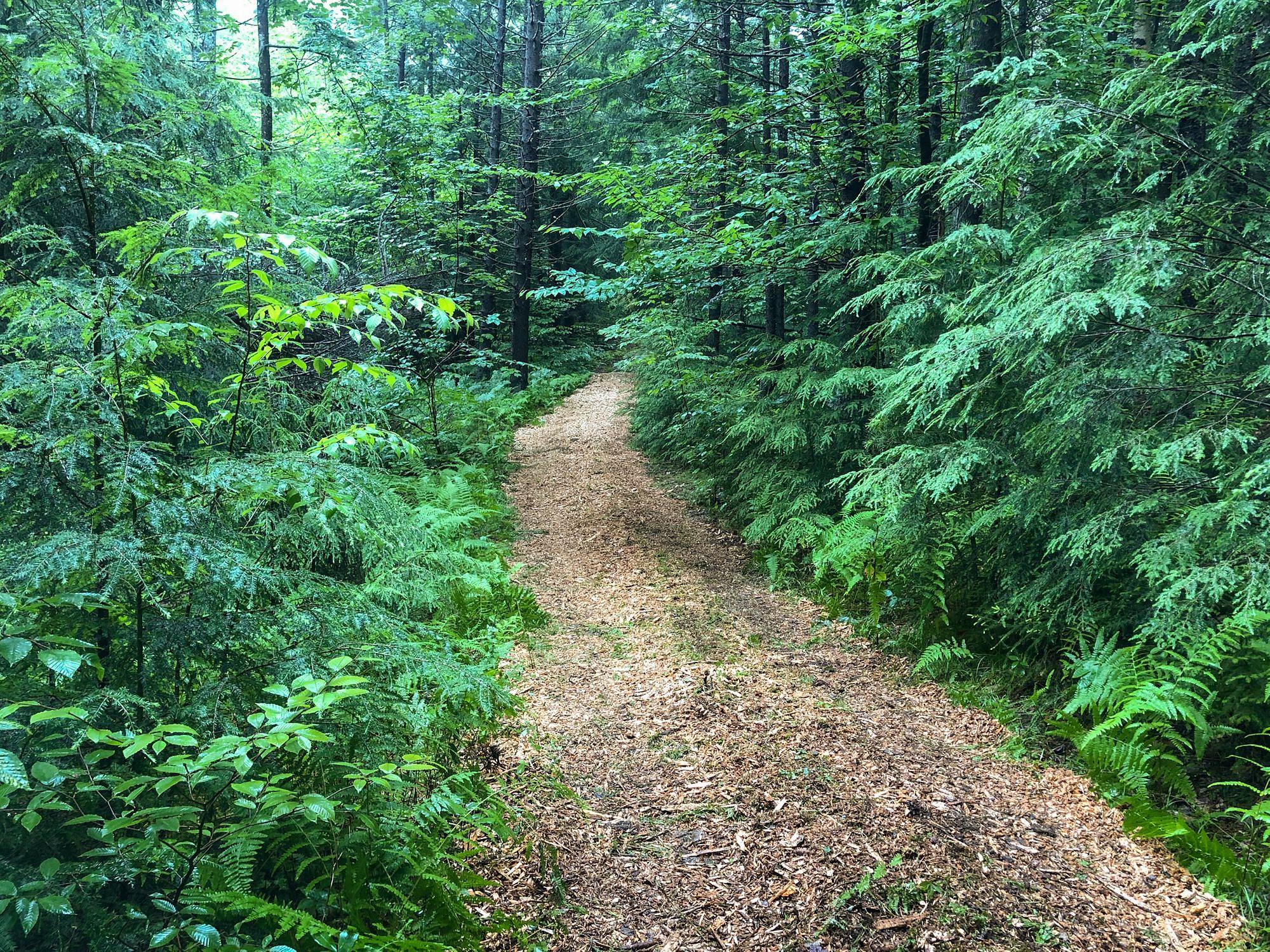 Wood Chips Trails