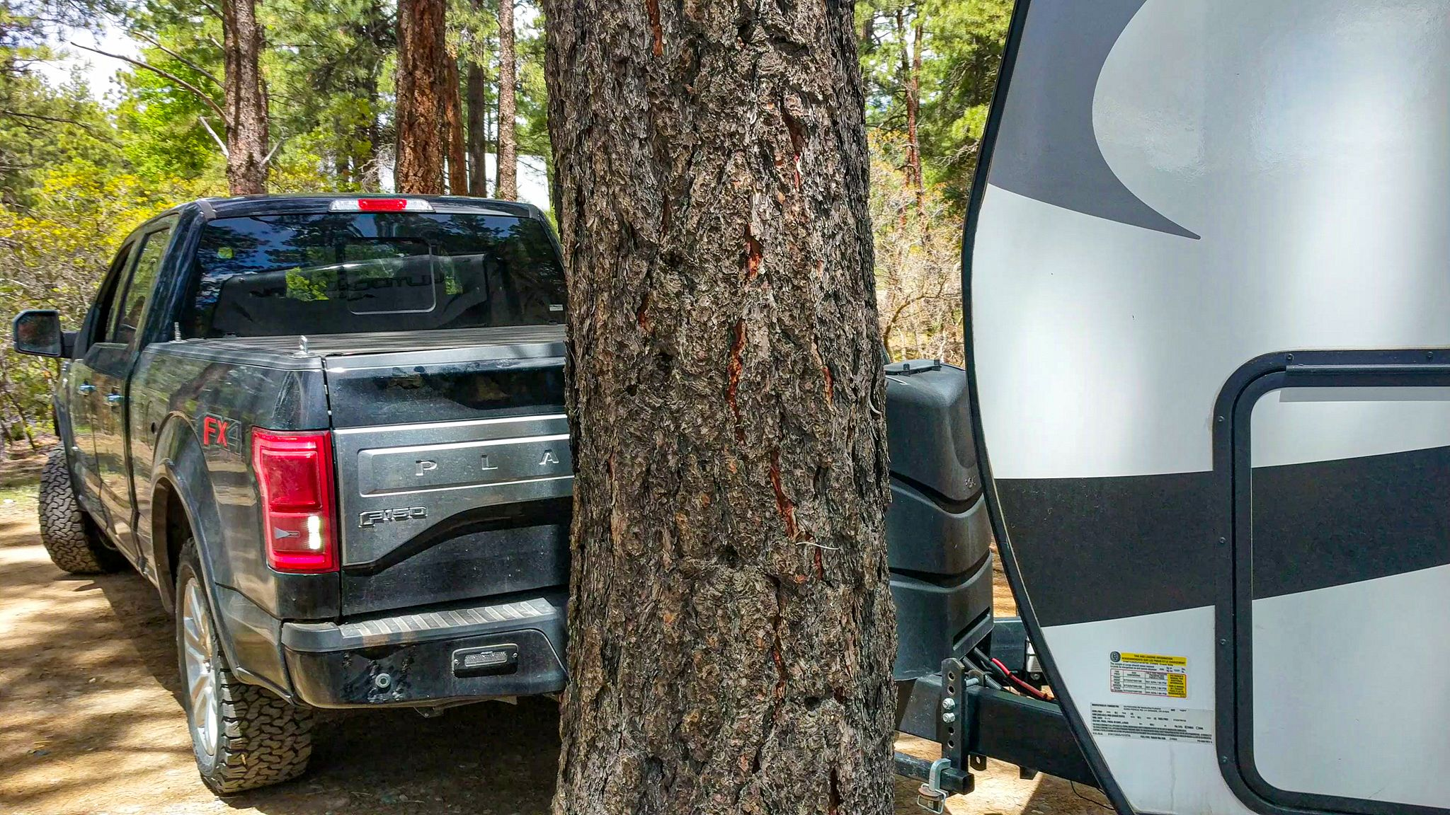 Crashing into a tree