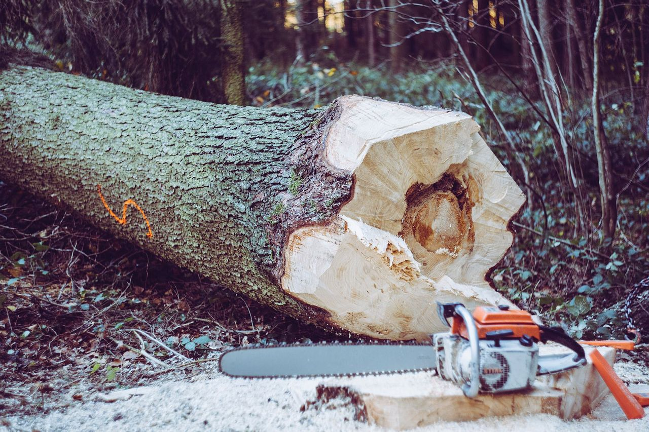 Game of Logging: Chainsaw Training